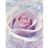 Delicate Rose Photo Mural