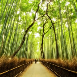 Japan Bamboo Mural Wallpaper
