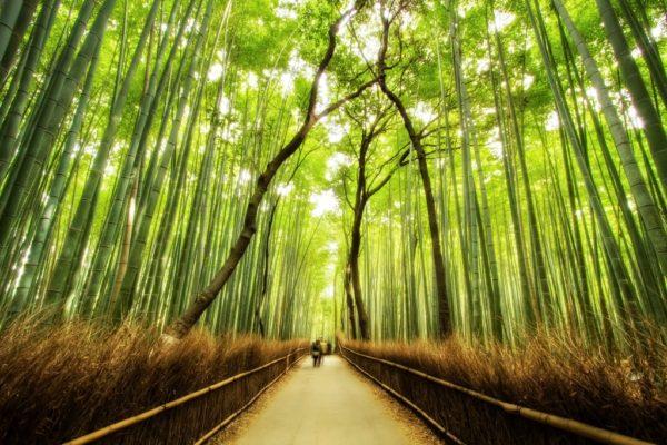 Japan Bamboo Mural Wallpaper