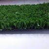 10mm Grass Carpet