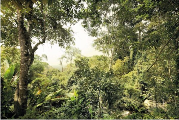 Dschungel Wallpaper